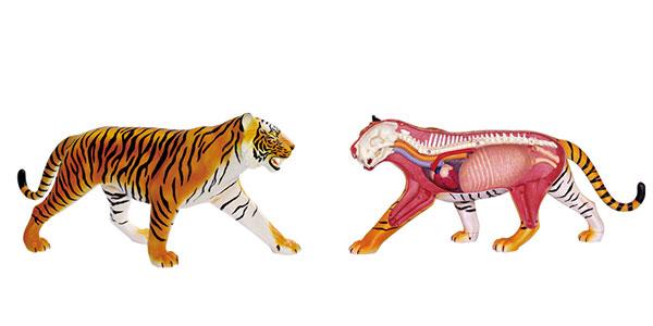 4d透视老虎解剖模型